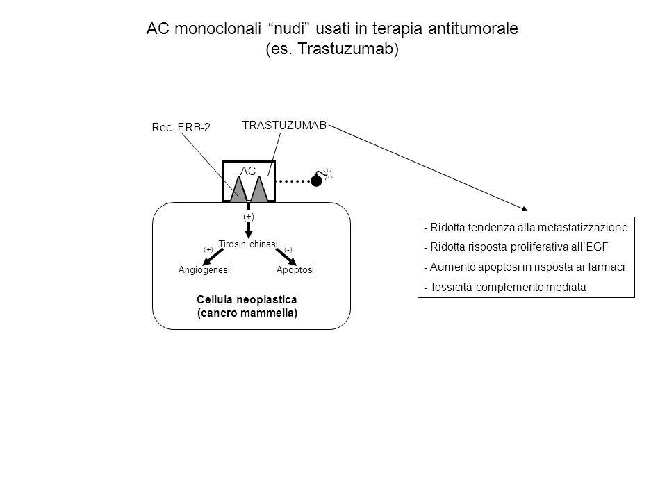 AC Tirosin chinasi (+) Angiogenesi Apoptosi (+)(-) Rec. ERB-2 TRASTUZUMAB Cellula neoplastica (cancro mammella) AC monoclonali nudi usati in terapia a
