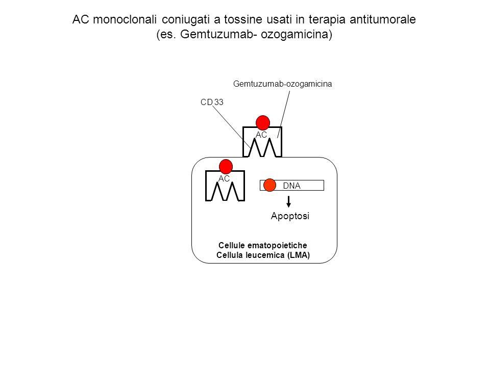 CD 33 Gemtuzumab-ozogamicina Cellule ematopoietiche Cellula leucemica (LMA) AC DNA Apoptosi AC monoclonali coniugati a tossine usati in terapia antitu