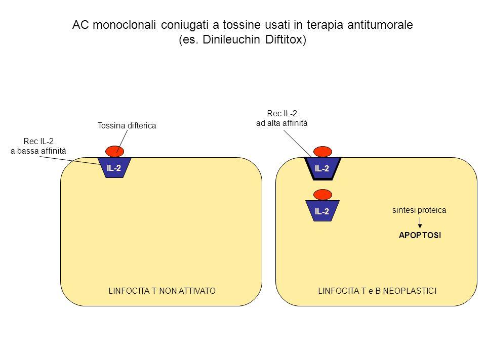 Rec IL-2 a bassa affinità LINFOCITA T NON ATTIVATO Rec IL-2 ad alta affinità LINFOCITA T e B NEOPLASTICI sintesi proteica APOPTOSI IL-2 Tossina difter