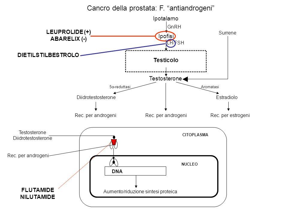 FLUTAMIDE NILUTAMIDE DNA Aumento/riduzione sintesi proteica NUCLEO CITOPLASMA Ipotalamo Testicolo GnRH LH/FSH Testosterone DiidrotestosteroneEstradiol