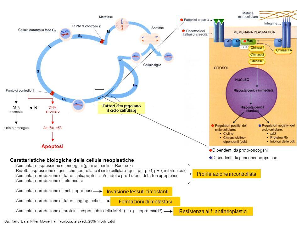 M DNA normale Il ciclo prosegue DNA anomalo R Att. Rb, p53 Apoptosi Da: Rang, Dale, Ritter, Moore. Farmacologia, terza ed., 2005 (modificato) Dipenden