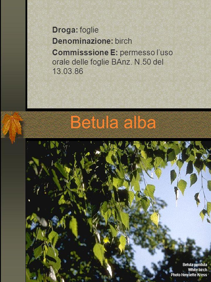 Betula alba Droga: foglie Denominazione: birch Commisssione E: permesso luso orale delle foglie BAnz. N.50 del 13.03.86