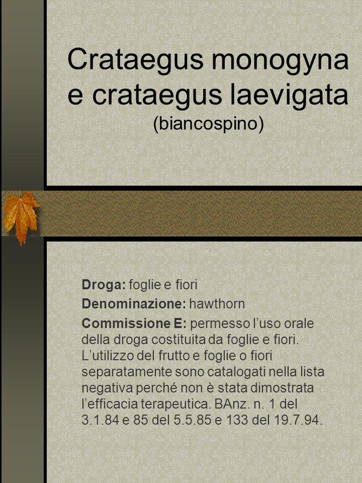 Crataegus monogyna e crataegus laevigata (biancospino) Droga: foglie e fiori Denominazione: hawthorn Commissione E: permesso luso orale della droga co