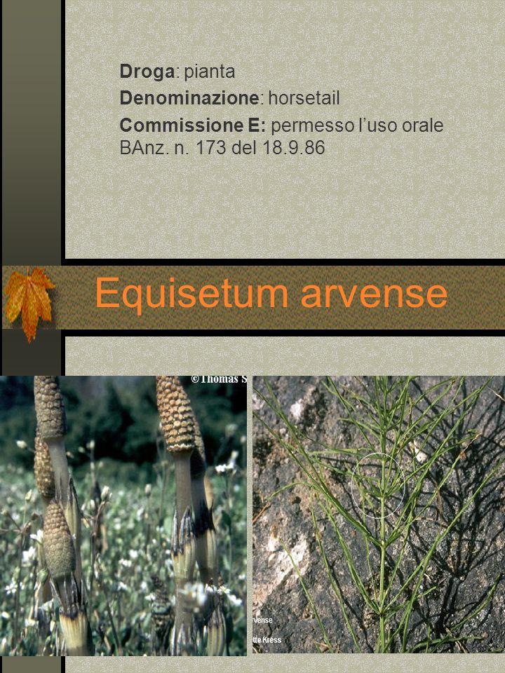 Equisetum arvense Droga: pianta Denominazione: horsetail Commissione E: permesso luso orale BAnz. n. 173 del 18.9.86
