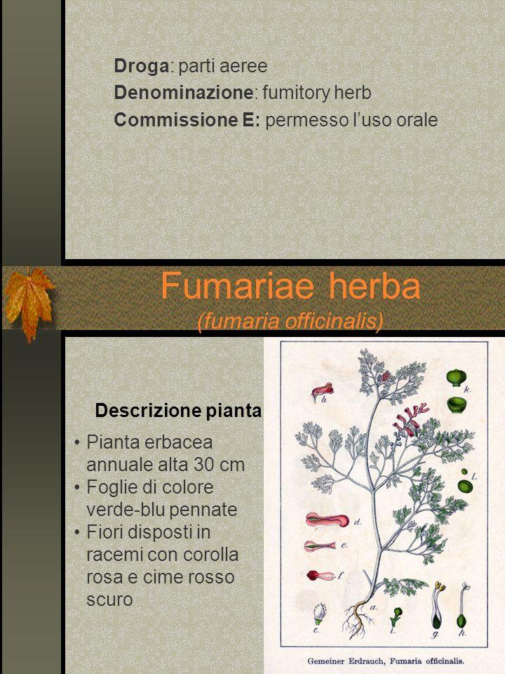 Droga: parti aeree Denominazione: fumitory herb Commissione E: permesso luso orale Fumariae herba (fumaria officinalis) Pianta erbacea annuale alta 30