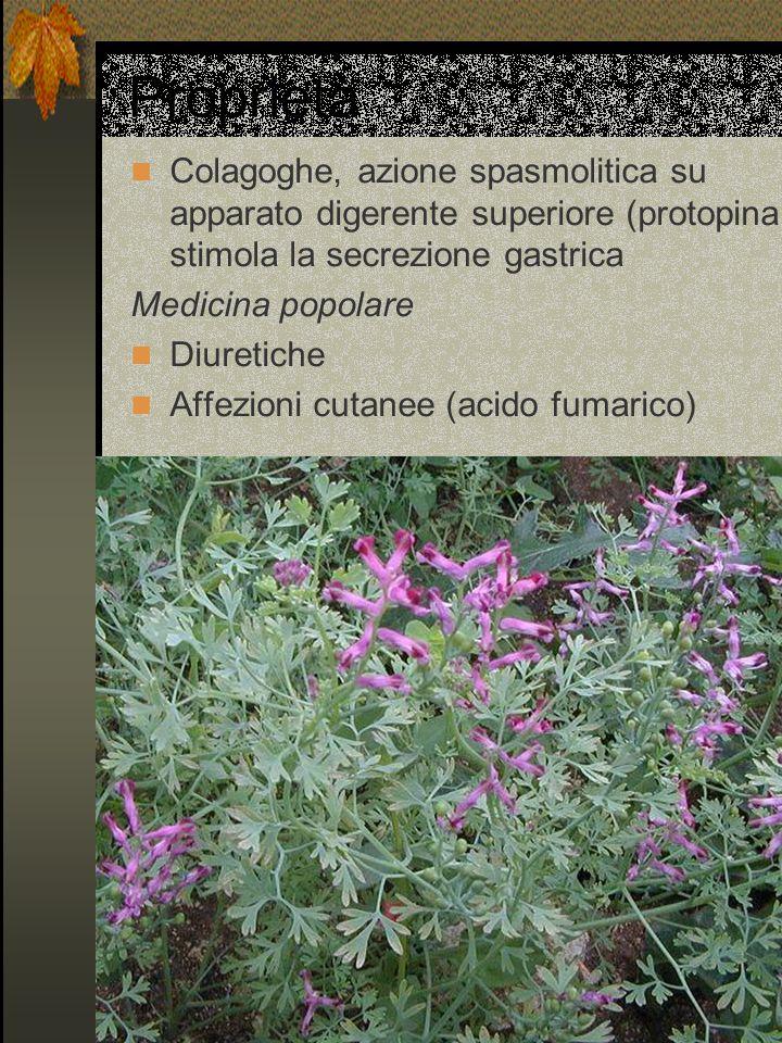 Proprietà Colagoghe, azione spasmolitica su apparato digerente superiore (protopina stimola la secrezione gastrica Medicina popolare Diuretiche Affezi