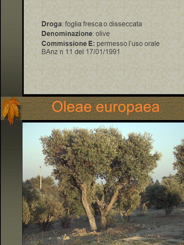 Droga: foglia fresca o disseccata Denominazione: olive Commissione E: permesso luso orale BAnz n 11 del 17/01/1991 Oleae europaea