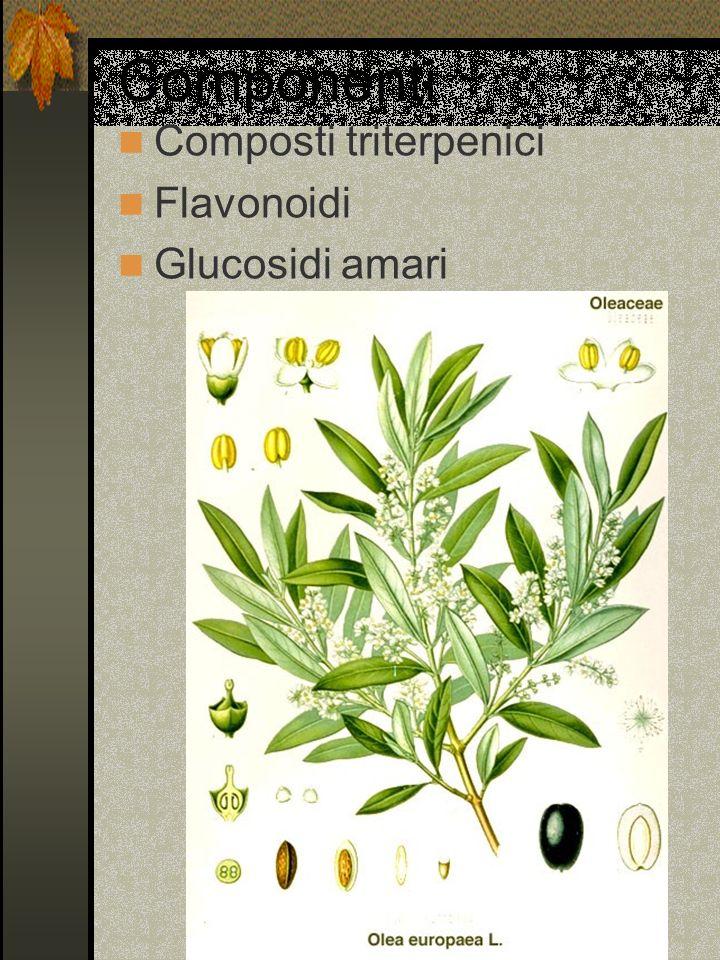 Componenti Composti triterpenici Flavonoidi Glucosidi amari