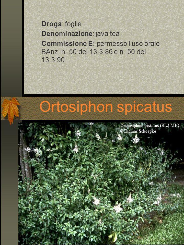 Droga: foglie Denominazione: java tea Commissione E: permesso luso orale BAnz. n. 50 del 13.3.86 e n. 50 del 13.3.90 Ortosiphon spicatus