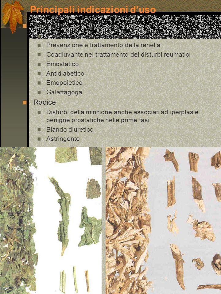 Parti aeree Infiammazione delle vie urinarie per indurre diuresi forzata Prevenzione e trattamento della renella Coadiuvante nel trattamento dei distu