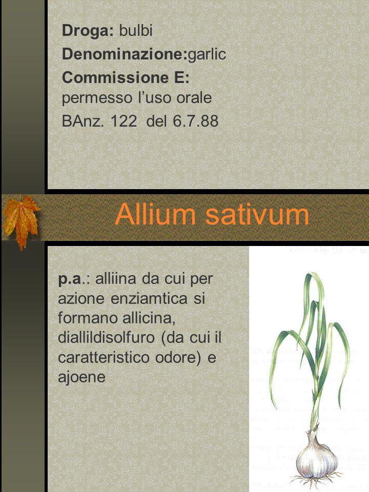 Allium sativum Droga: bulbi Denominazione:garlic Commissione E: permesso luso orale BAnz. 122 del 6.7.88 p.a.: alliina da cui per azione enziamtica si