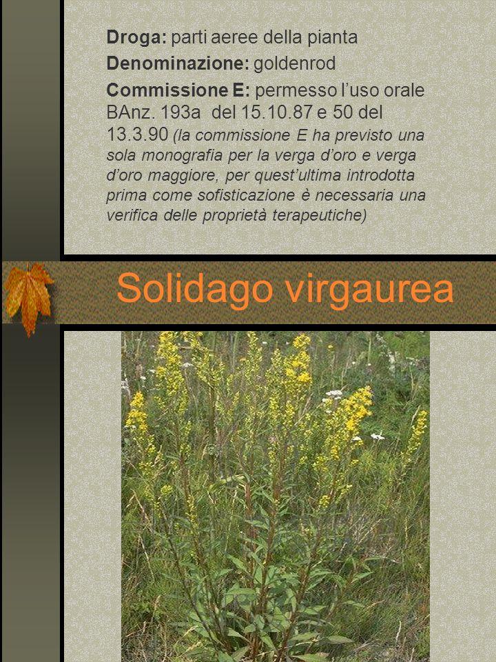 Droga: parti aeree della pianta Denominazione: goldenrod Commissione E: permesso luso orale BAnz. 193a del 15.10.87 e 50 del 13.3.90 (la commissione E