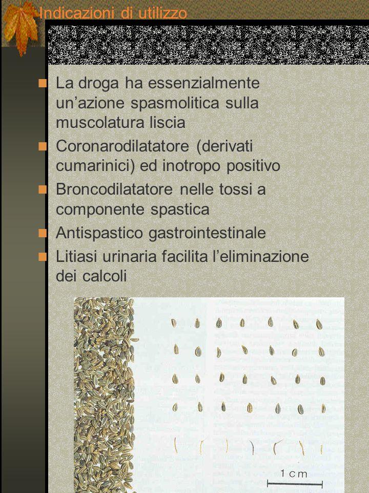 La droga ha essenzialmente unazione spasmolitica sulla muscolatura liscia Coronarodilatatore (derivati cumarinici) ed inotropo positivo Broncodilatato