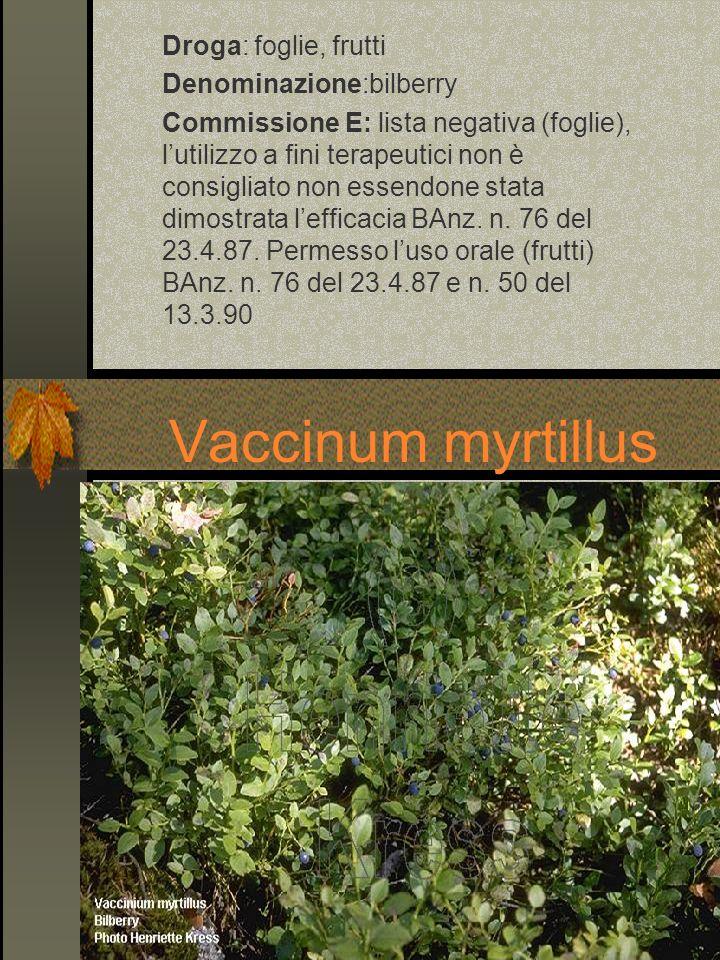 Vaccinum myrtillus Droga: foglie, frutti Denominazione:bilberry Commissione E: lista negativa (foglie), lutilizzo a fini terapeutici non è consigliato
