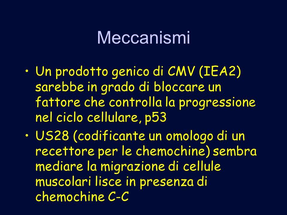 Meccanismi Un prodotto genico di CMV (IEA2) sarebbe in grado di bloccare un fattore che controlla la progressione nel ciclo cellulare, p53 US28 (codificante un omologo di un recettore per le chemochine) sembra mediare la migrazione di cellule muscolari lisce in presenza di chemochine C-C