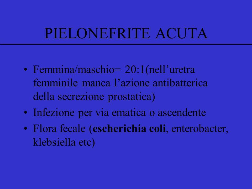PIELONEFRITE ACUTA Femmina/maschio= 20:1(nelluretra femminile manca lazione antibatterica della secrezione prostatica) Infezione per via ematica o ascendente Flora fecale (escherichia coli, enterobacter, klebsiella etc)
