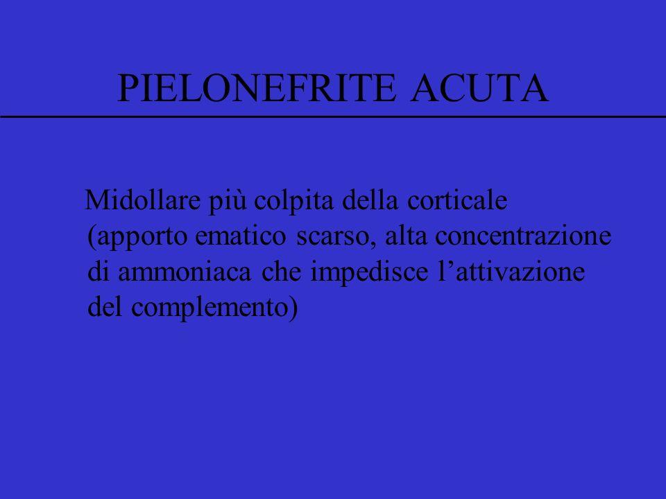 Midollare più colpita della corticale (apporto ematico scarso, alta concentrazione di ammoniaca che impedisce lattivazione del complemento) PIELONEFRITE ACUTA
