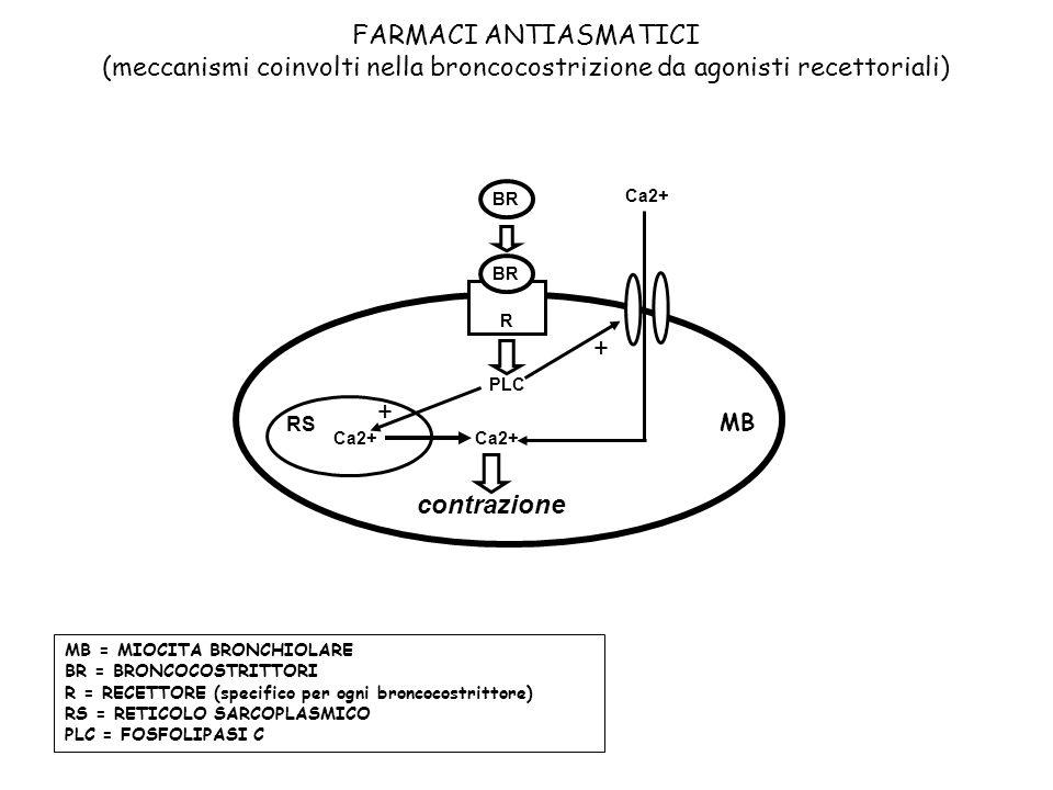 MB = MIOCITA BRONCHIOLARE BR = BRONCOCOSTRITTORI R = RECETTORE (specifico per ogni broncocostrittore) RS = RETICOLO SARCOPLASMICO PLC = FOSFOLIPASI C