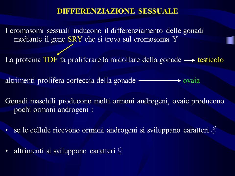 I cromosomi sessuali inducono il differenziamento delle gonadi mediante il gene SRY che si trova sul cromosoma Y La proteina TDF fa proliferare la mid