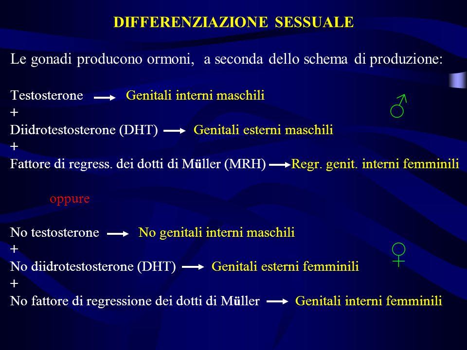 Le gonadi producono ormoni, a seconda dello schema di produzione: Testosterone Genitali interni maschili + Diidrotestosterone (DHT) Genitali esterni m