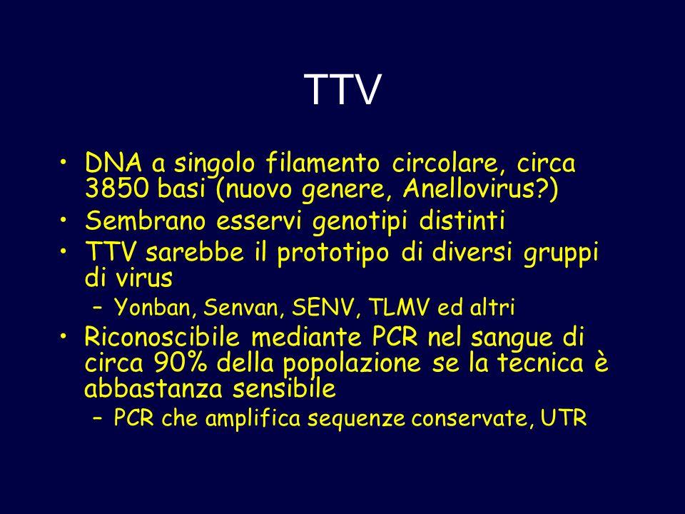 TTV DNA a singolo filamento circolare, circa 3850 basi (nuovo genere, Anellovirus?) Sembrano esservi genotipi distinti TTV sarebbe il prototipo di div