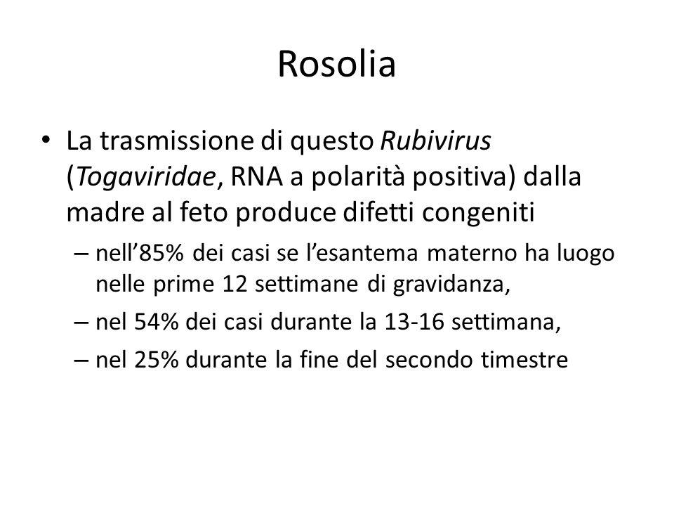 Rosolia La trasmissione di questo Rubivirus (Togaviridae, RNA a polarità positiva) dalla madre al feto produce difetti congeniti – nell85% dei casi se