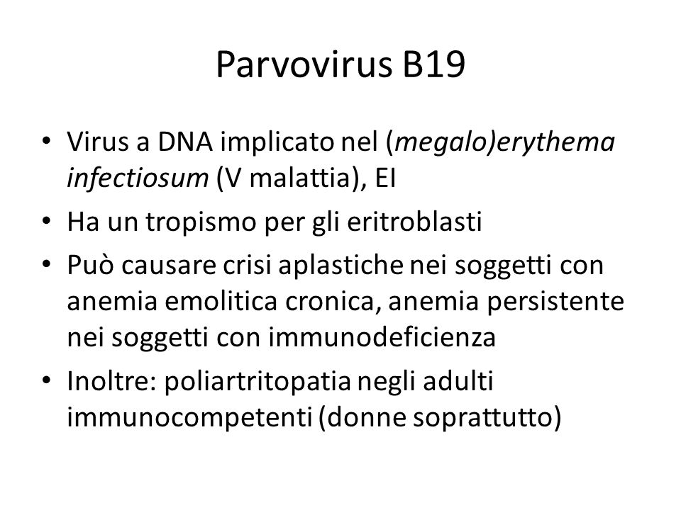 Parvovirus B19 Virus a DNA implicato nel (megalo)erythema infectiosum (V malattia), EI Ha un tropismo per gli eritroblasti Può causare crisi aplastich