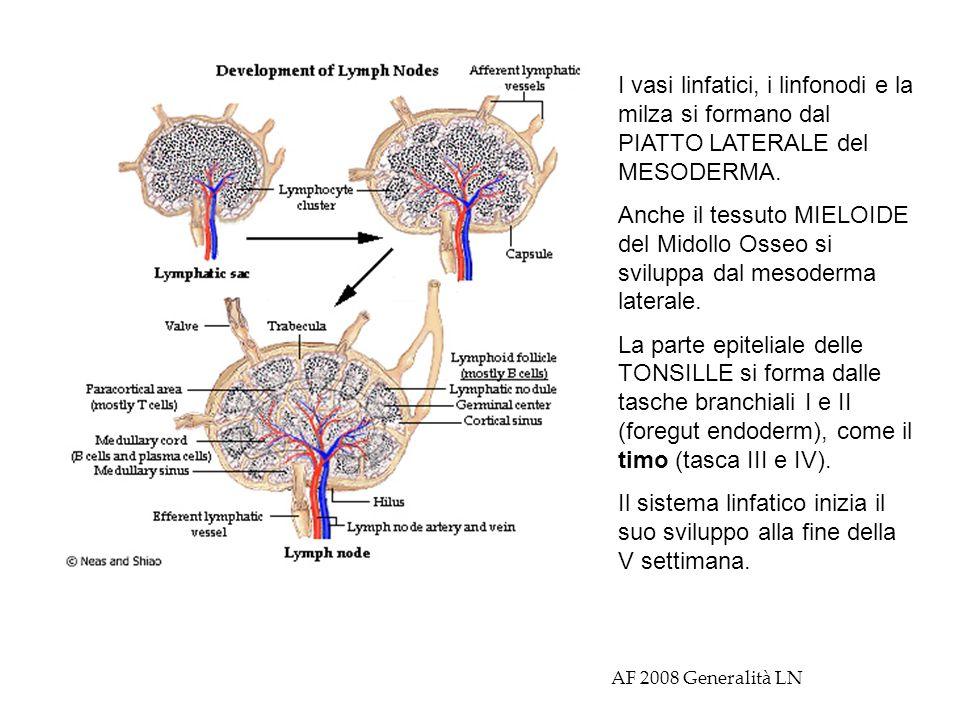 I vasi linfatici, i linfonodi e la milza si formano dal PIATTO LATERALE del MESODERMA.