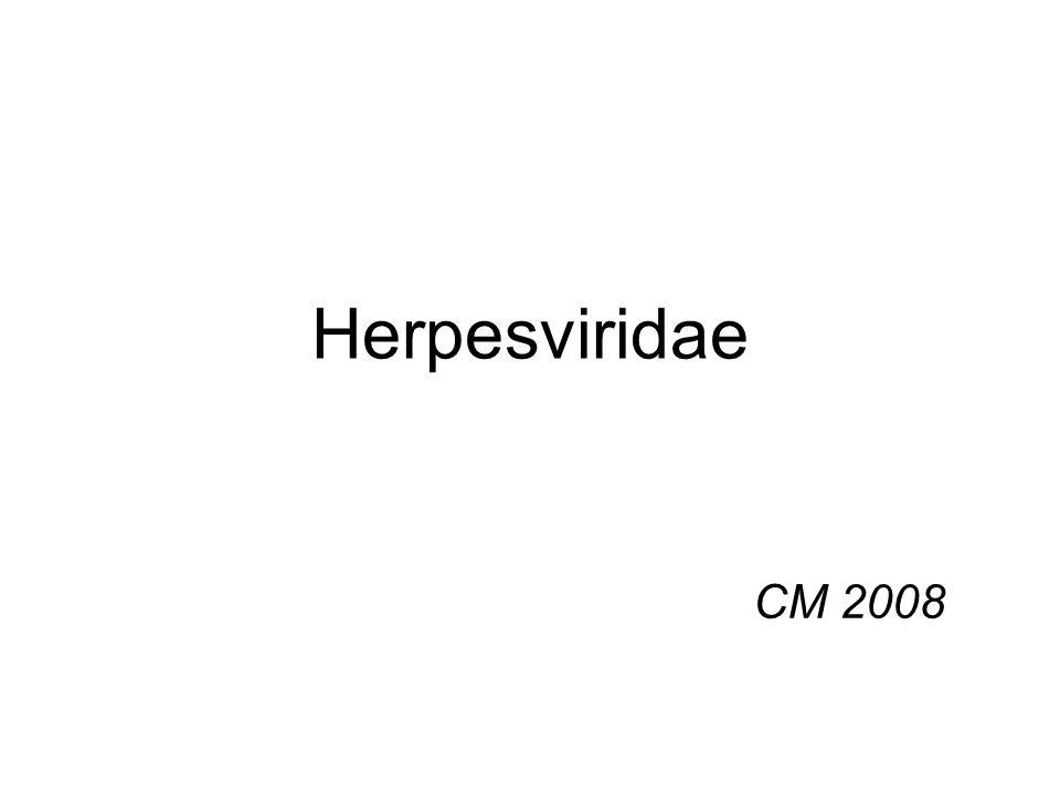Herpesviridae CM 2008