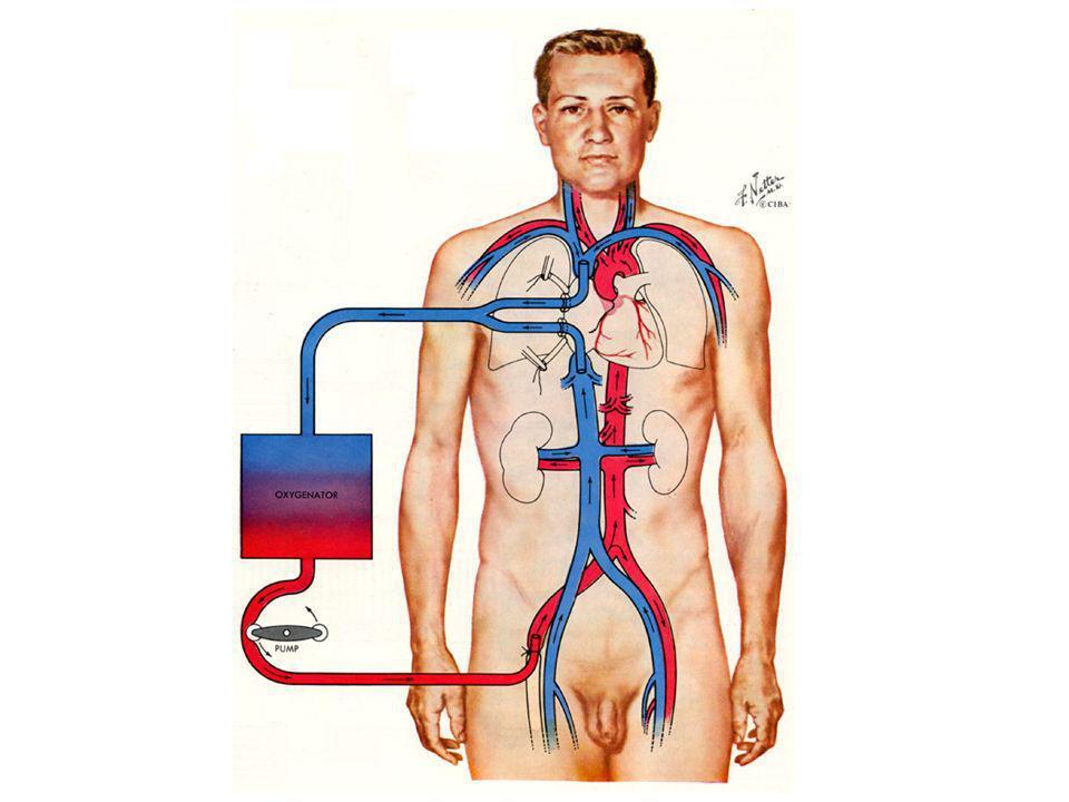 Concetto base su cui si fonda la CEC Circolazione Extracorporea Sistema di cannule di drenaggio Paziente Aspiratori Pompa roller Cardiotomo di raccolta e Filtro Ossigenatore e Scambiatore di calore Emofiltro Pompa roller Cannula aortica