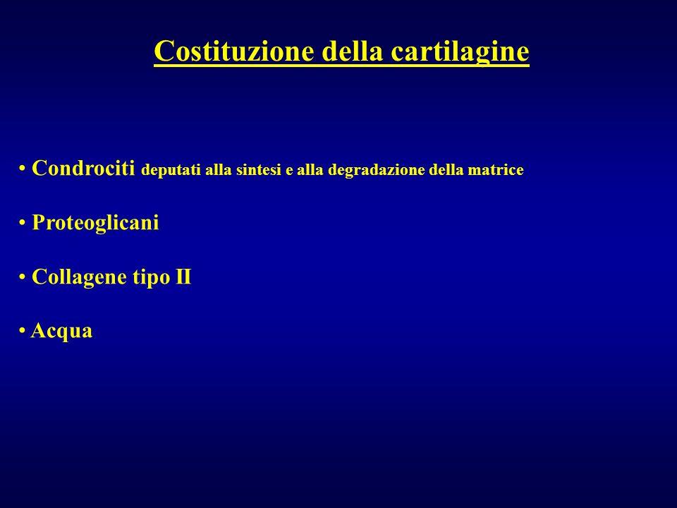 Costituzione della cartilagine Condrociti deputati alla sintesi e alla degradazione della matrice Proteoglicani Collagene tipo II Acqua