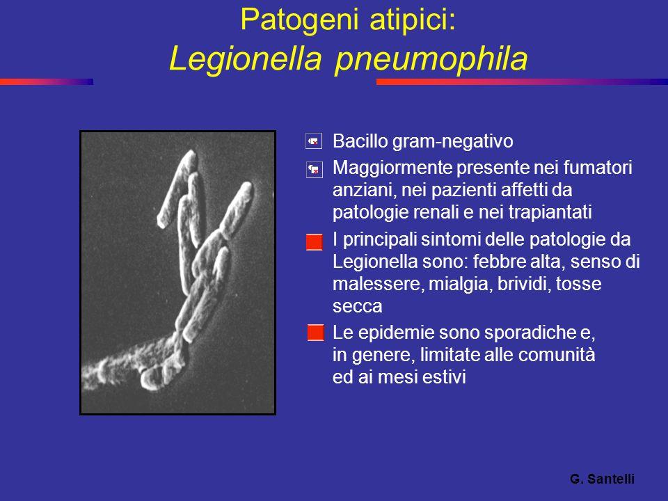 Patogeni atipici: Legionella pneumophila Bacillo gram-negativo Maggiormente presente nei fumatori anziani, nei pazienti affetti da patologie renali e