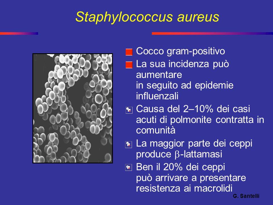 Staphylococcus aureus Cocco gram-positivo La sua incidenza può aumentare in seguito ad epidemie influenzali Causa del 2–10% dei casi acuti di polmonit