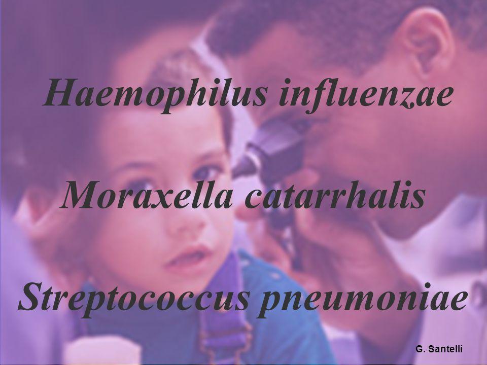 42 Haemophilus influenzae Moraxella catarrhalis Streptococcus pneumoniae G. Santelli