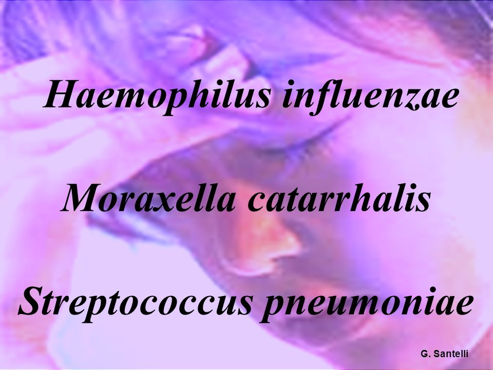 50 Haemophilus influenzae Moraxella catarrhalis Streptococcus pneumoniae G. Santelli