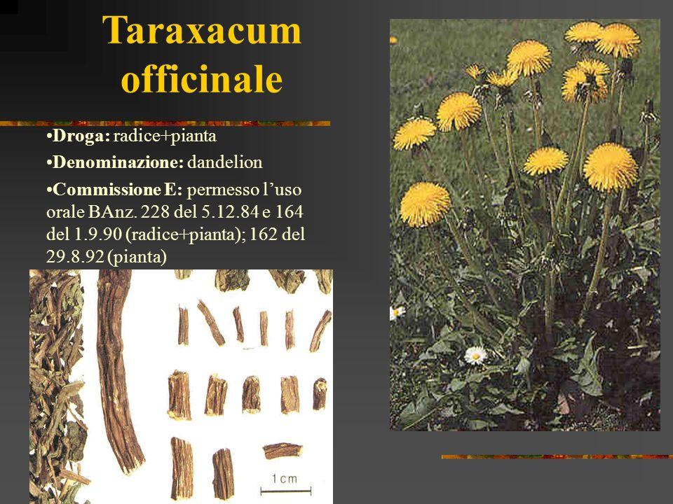 Taraxacum officinale Droga: radice+pianta Denominazione: dandelion Commissione E: permesso luso orale BAnz. 228 del 5.12.84 e 164 del 1.9.90 (radice+p