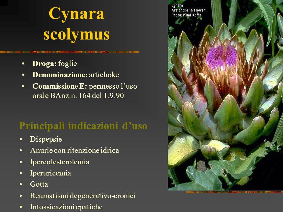 Cynara scolymus Droga: foglie Denominazione: artichoke Commissione E: permesso luso orale BAnz.n. 164 del 1.9.90 Dispepsie Anurie con ritenzione idric