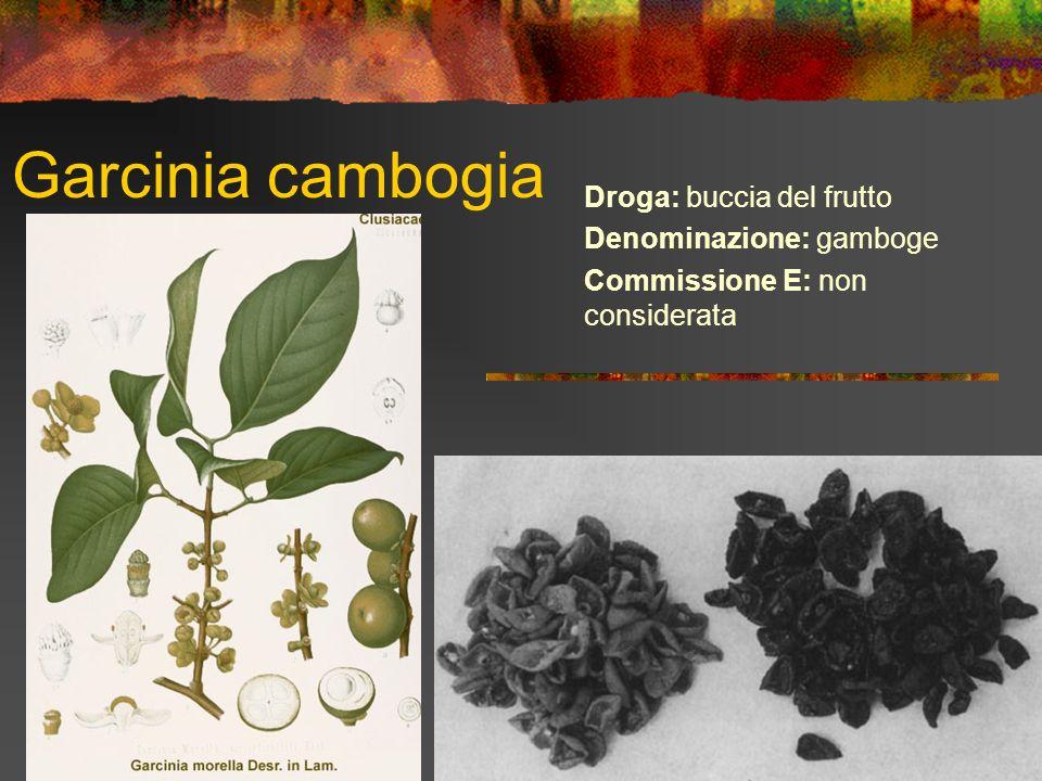 Garcinia cambogia Droga: buccia del frutto Denominazione: gamboge Commissione E: non considerata