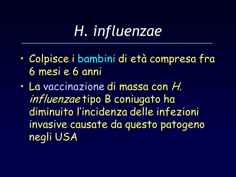 H. influenzae Colpisce i bambini di età compresa fra 6 mesi e 6 anni La vaccinazione di massa con H. influenzae tipo B coniugato ha diminuito linciden