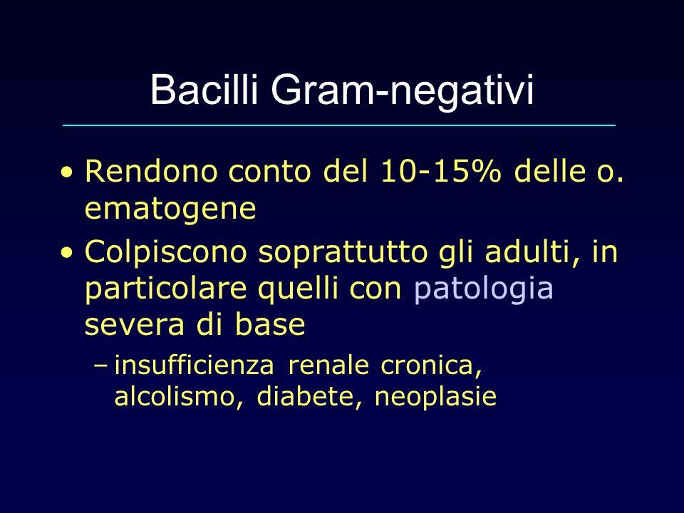 Bacilli Gram-negativi Rendono conto del 10-15% delle o. ematogene Colpiscono soprattutto gli adulti, in particolare quelli con patologia severa di bas