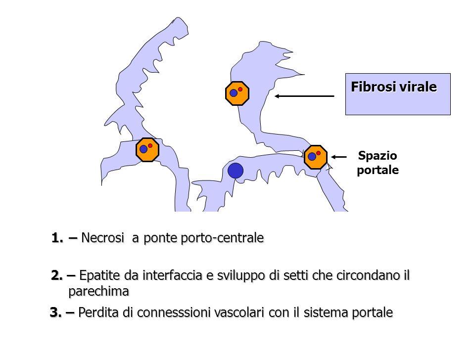 Spazio portale Fibrosi virale 1.– Necrosi a ponte porto-centrale 2. – Epatite da interfaccia e sviluppo di setti che circondano il parechima 3. – Perd