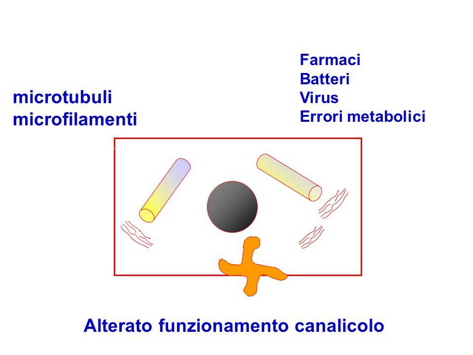 Alterazione microtubuli microfilamenti Alterato funzionamento canalicolo Farmaci Batteri Virus Errori metabolici