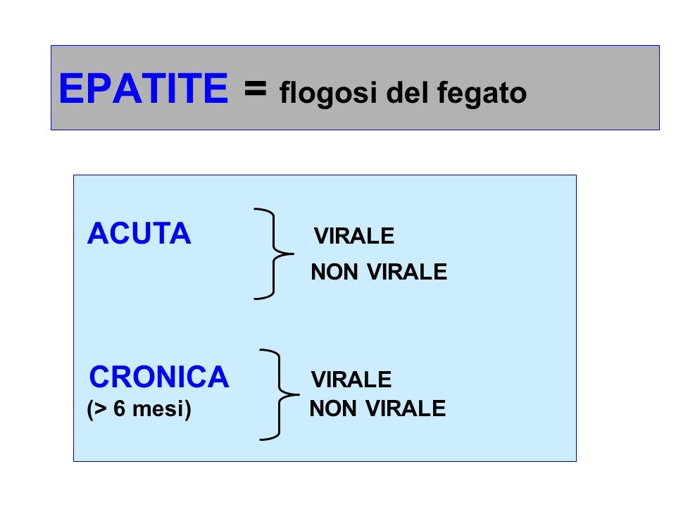 EPATITE = flogosi del fegato ACUTA VIRALE NON VIRALE CRONICA VIRALE (> 6 mesi) NON VIRALE