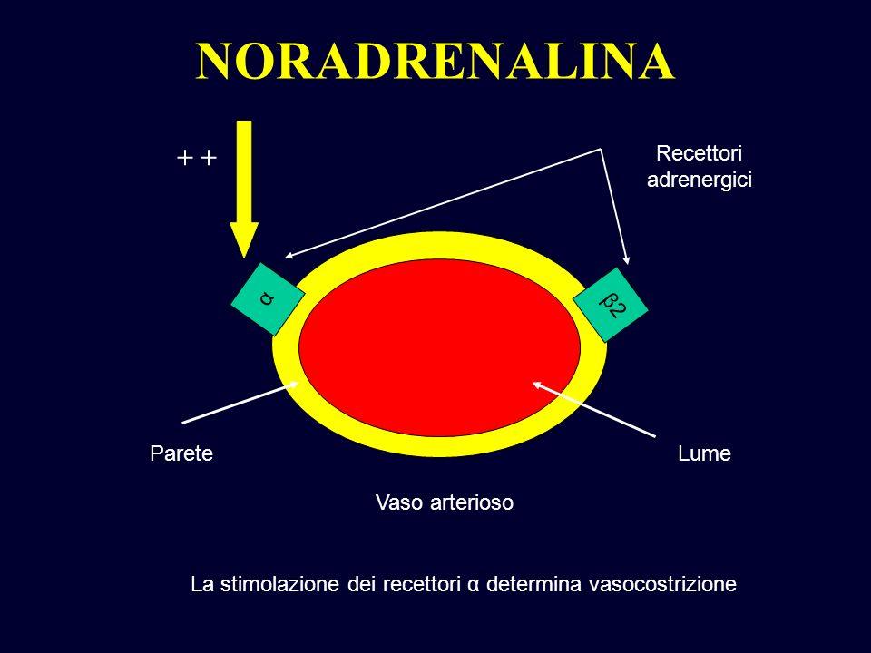 NORADRENALINA α β2β2 Vaso arterioso Parete Recettori adrenergici La stimolazione dei recettori α determina vasocostrizione Lume +