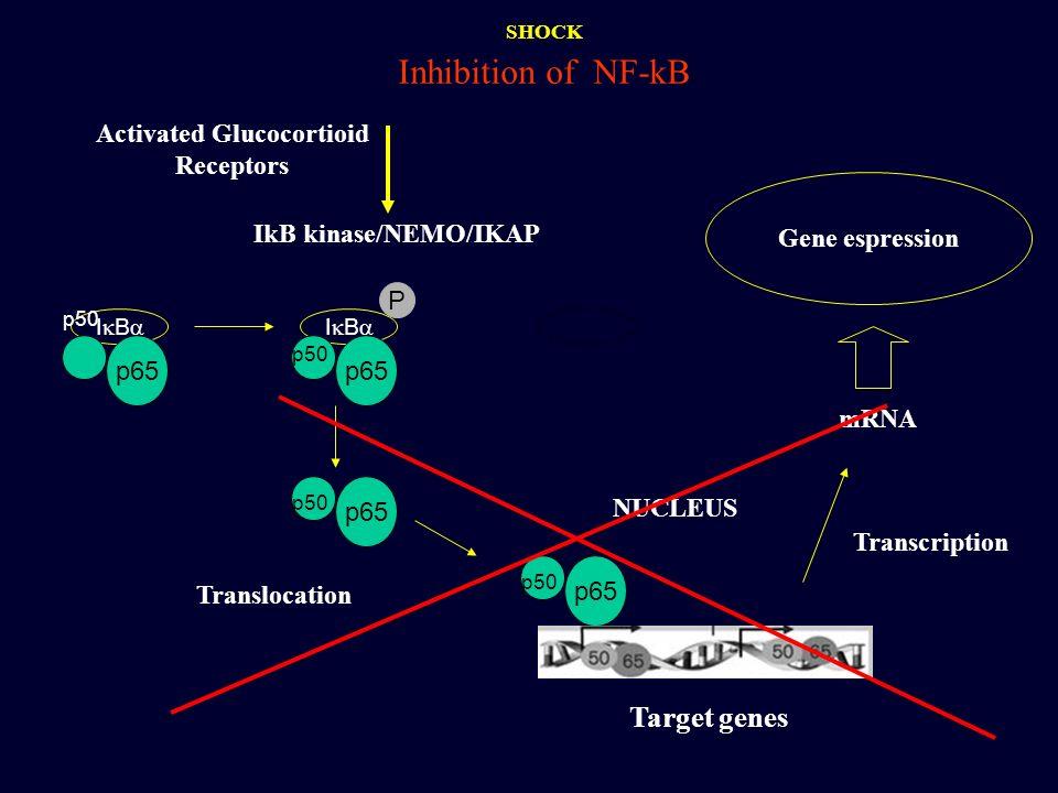 Activated Glucocortioid Receptors IkB kinase/NEMO/IKAP I B p65 p50 I B p65 p50 P p65 p50 p65 p50 NUCLEUS mRNA Gene espression Translocation Transcript