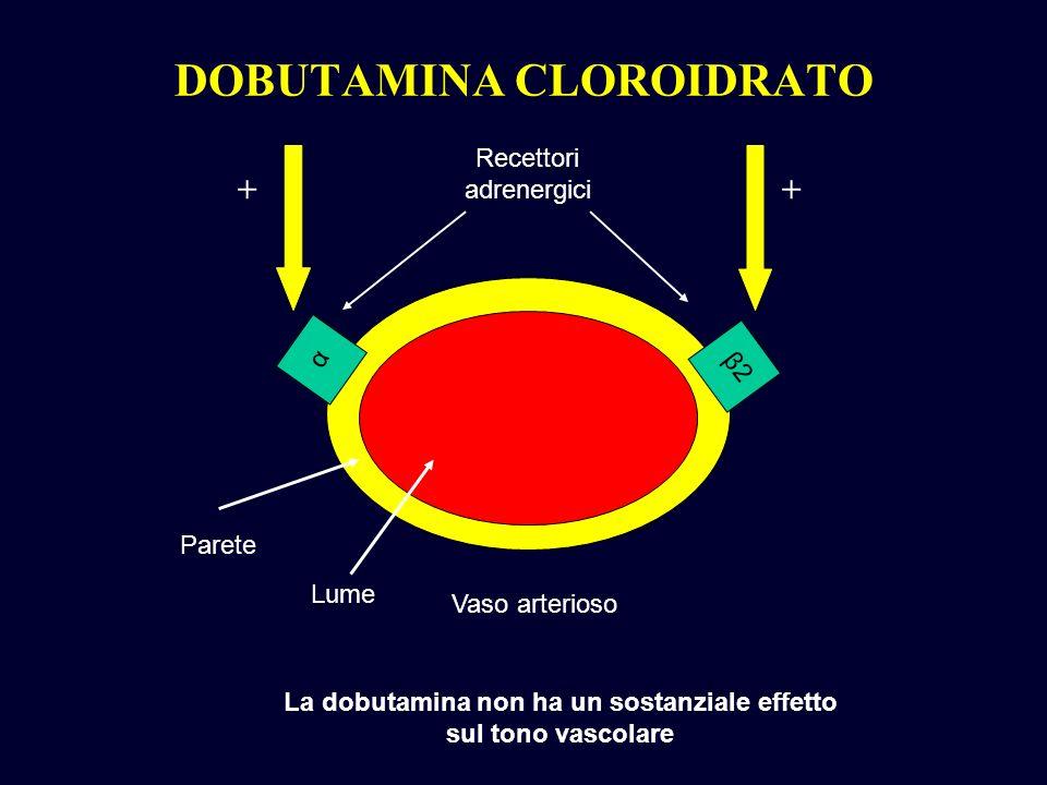 DOBUTAMINA CLOROIDRATO α β2β2 Vaso arterioso Parete Recettori adrenergici La dobutamina non ha un sostanziale effetto sul tono vascolare Lume ++