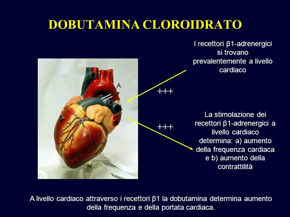 I recettori β1-adrenergici si trovano prevalentemente a livello cardiaco La stimolazione dei recettori β1-adrenergici a livello cardiaco determina: a)