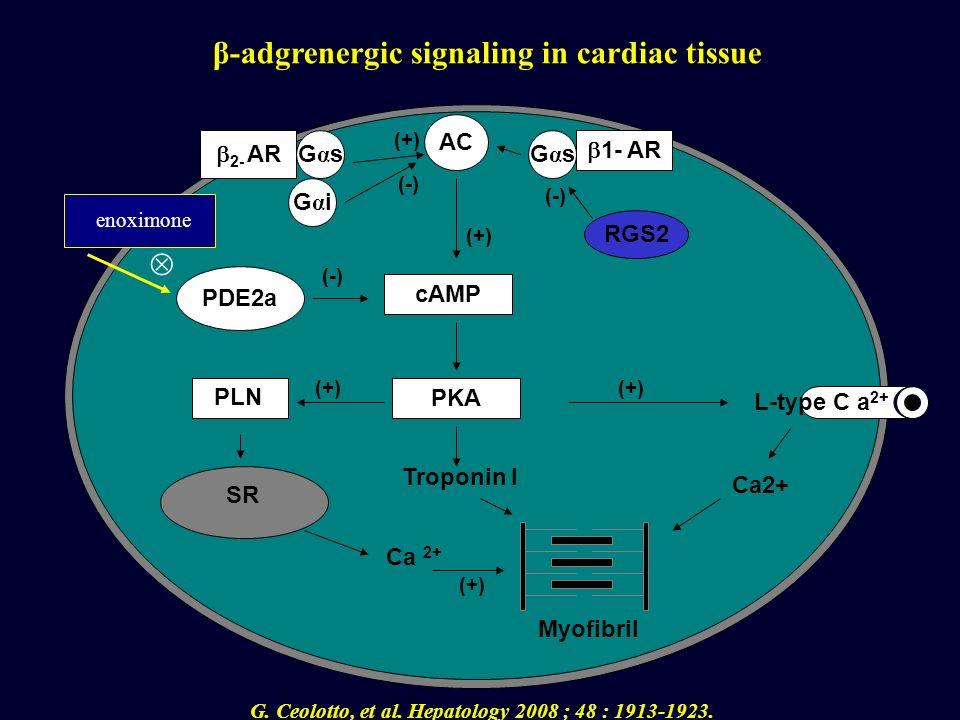 2- AR 1- AR AC GαsGαsGαsGαs GαiGαi cAMP PKA Troponin I RGS2 PDE2a Ca2+ Myofibril L-type C a 2+ Ca 2+ SR PLN (-) (+) (-) (+) β-adgrenergic signaling in
