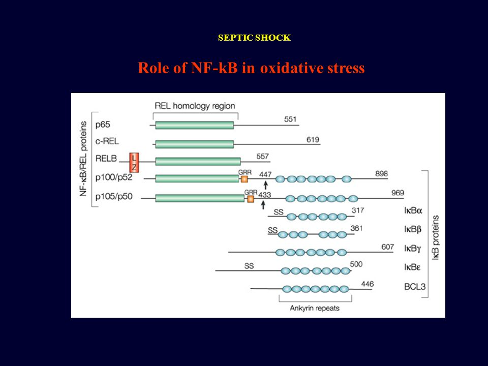 Role of NF-kB in oxidative stress SEPTIC SHOCK