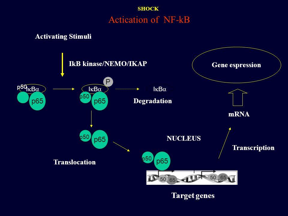 Activating Stimuli IkB kinase/NEMO/IKAP I B p65 p50 I B p65 p50 P I B Degradation p65 p50 p65 p50 NUCLEUS mRNA Gene espression Translocation Transcrip